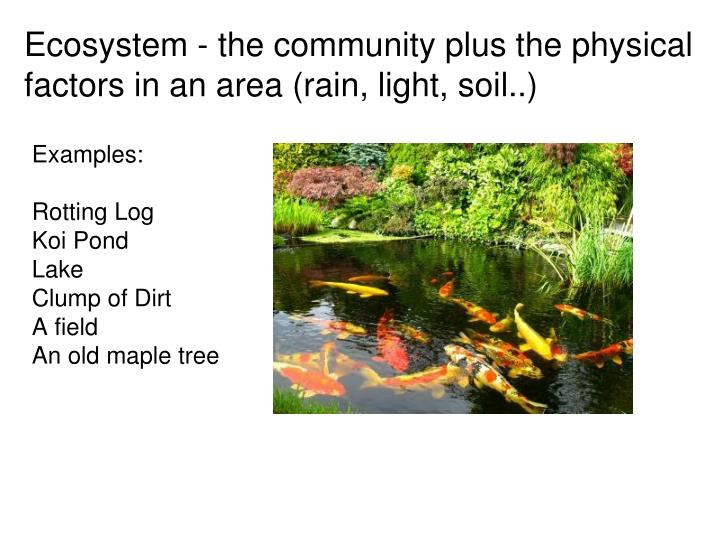 Ecosystem - the community plus the physical factors in an area (rain, light, soil..)