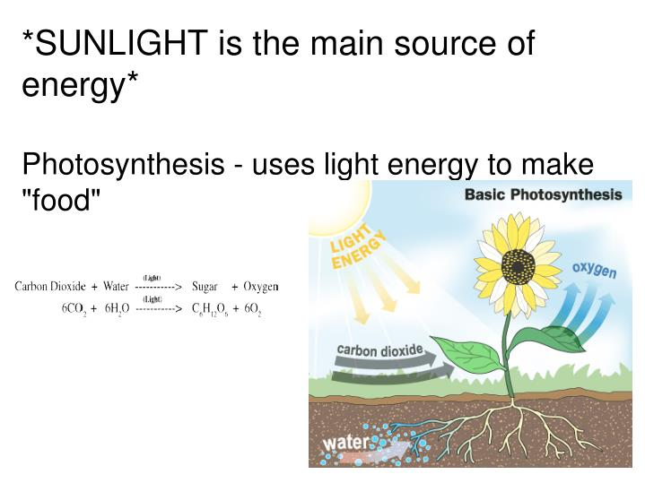 *SUNLIGHT is the main source of energy*