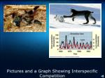 pictures and a graph showing interspecific competition