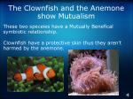 the clownfish and the anemone show mutualism