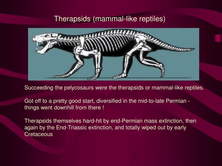 Therapsids (mammal-like reptiles)