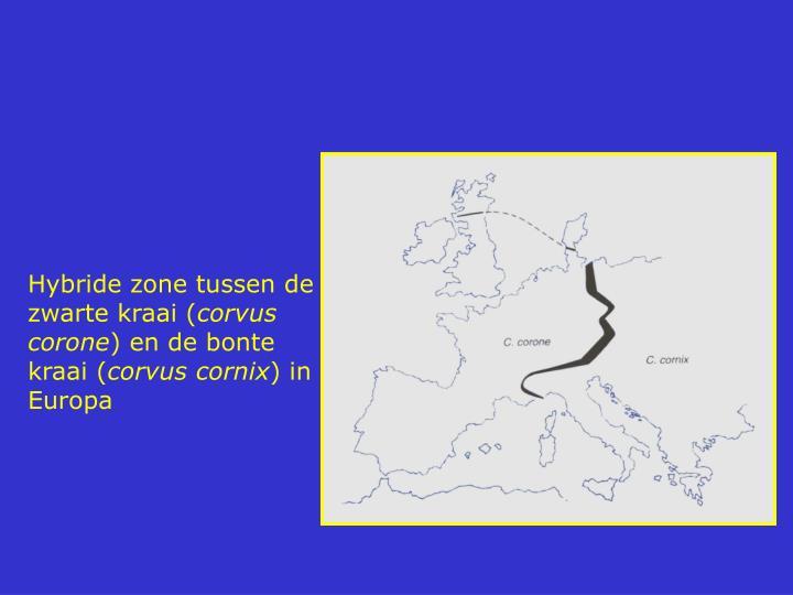 Hybride zone tussen de zwarte kraai (
