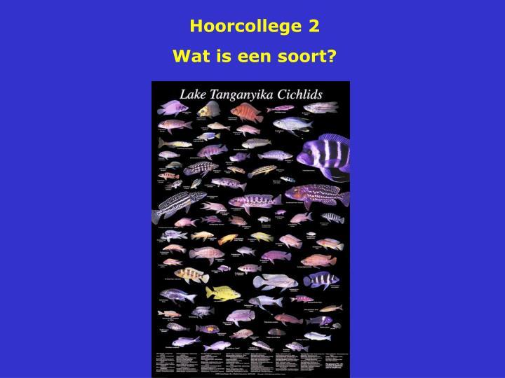 Hoorcollege 2