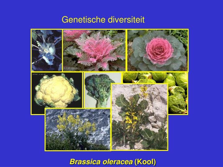 Genetische diversiteit