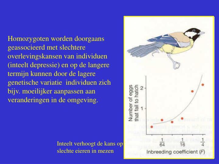 Homozygoten worden doorgaans geassocieerd met slechtere overlevingskansen van individuen (inteelt depressie) en op de langere termijn kunnen