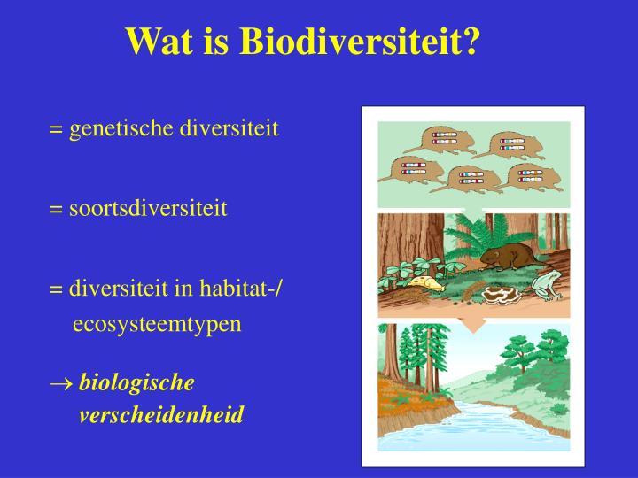Wat is Biodiversiteit?