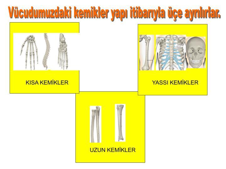 Vücudumuzdaki kemikler yapı itibarıyla üçe ayrılırlar.