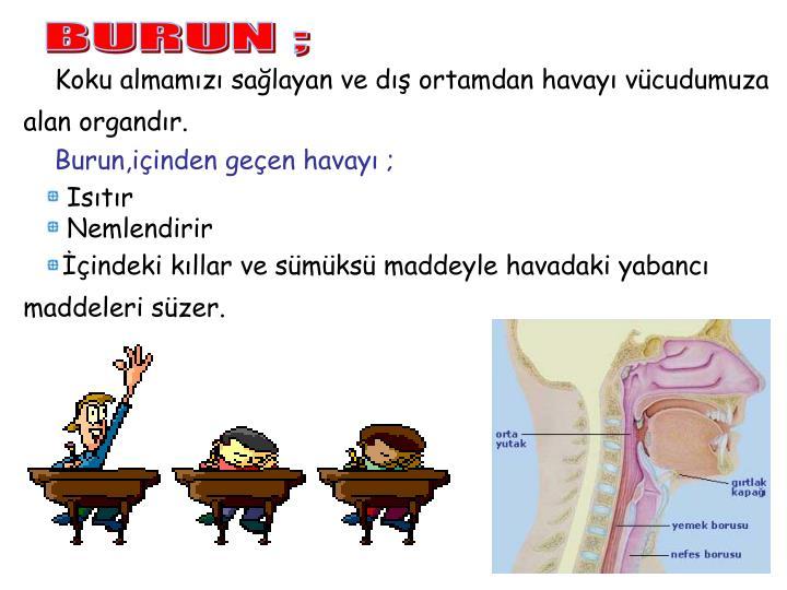 BURUN ;