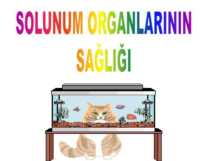 SOLUNUM ORGANLARININ