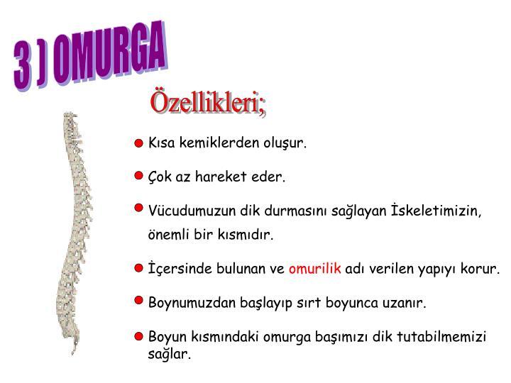 3 ) OMURGA