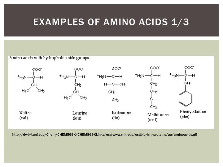Examples of Amino Acids 1/3