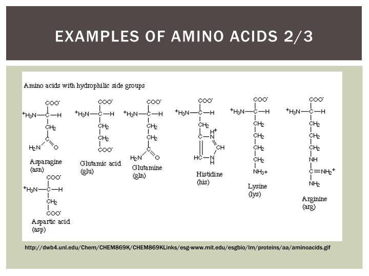 Examples of Amino Acids
