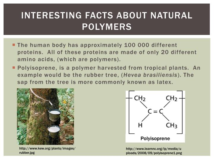 Interesting Facts about natural polymers