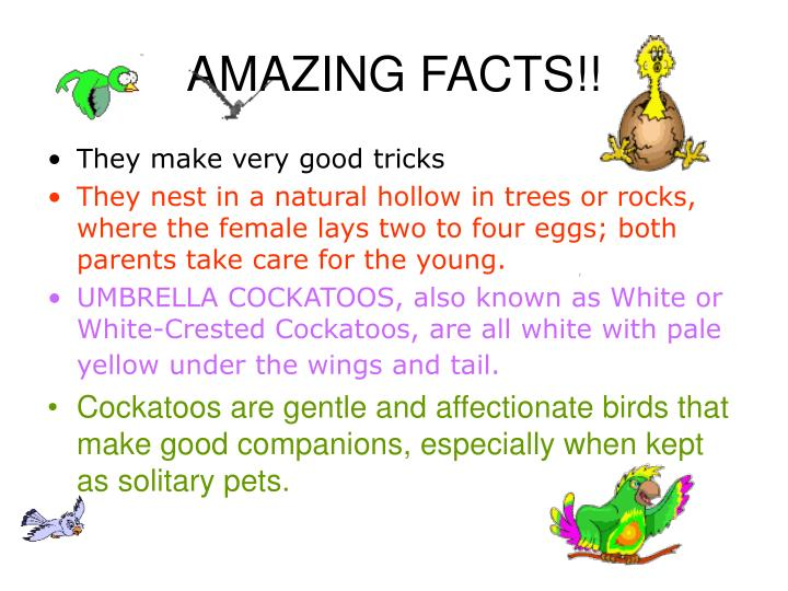 AMAZING FACTS!!