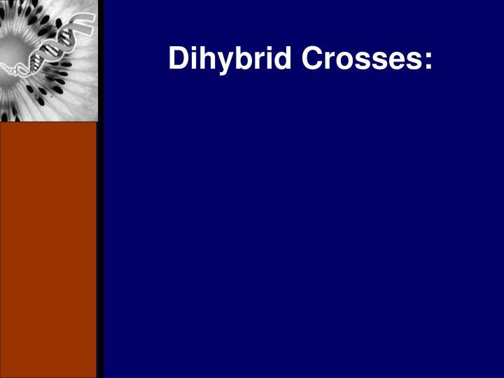 Dihybrid Crosses: