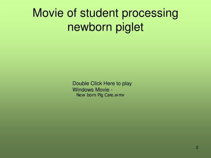 Movie of student processing newborn piglet