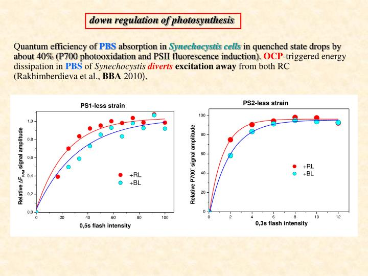down regulation of photosynthesis