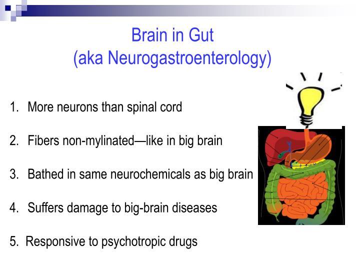 Brain in Gut