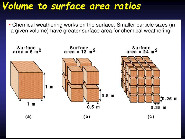 Volume to surface area ratios