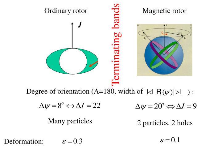 Ordinary rotor
