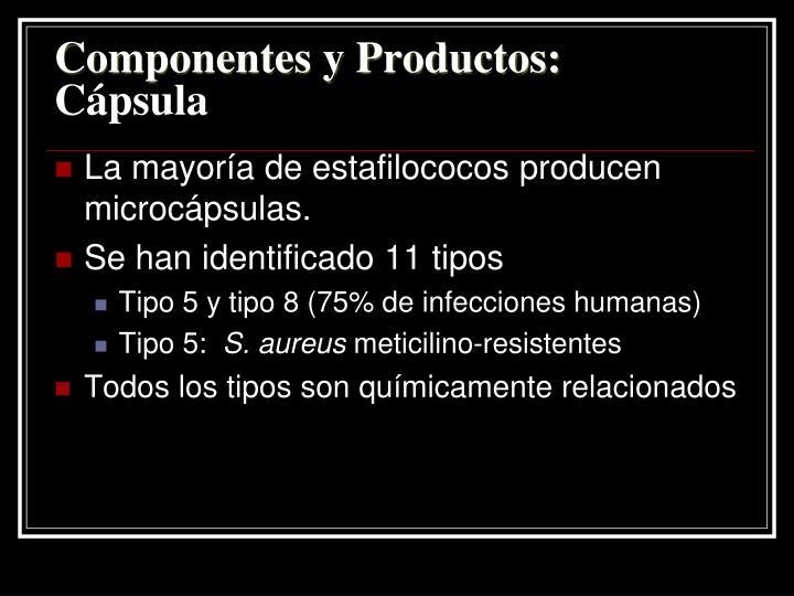 Componentes y Productos: