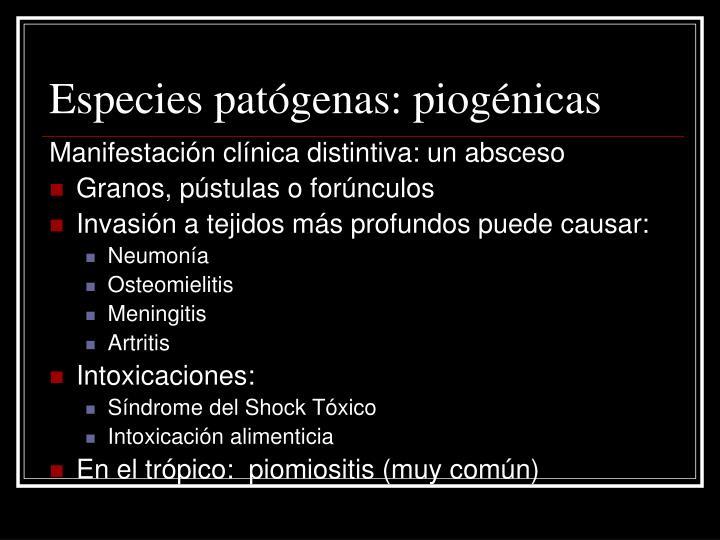 Especies patógenas: piogénicas