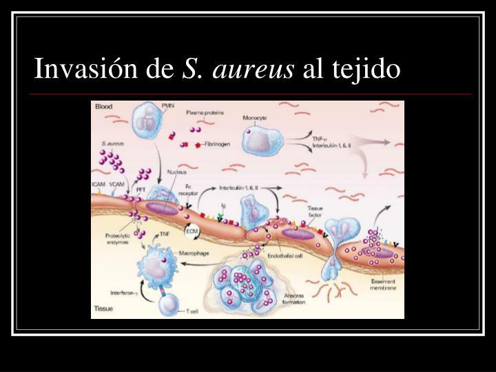 Invasión de