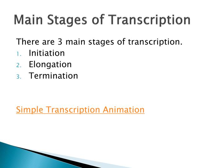 Main Stages of Transcription