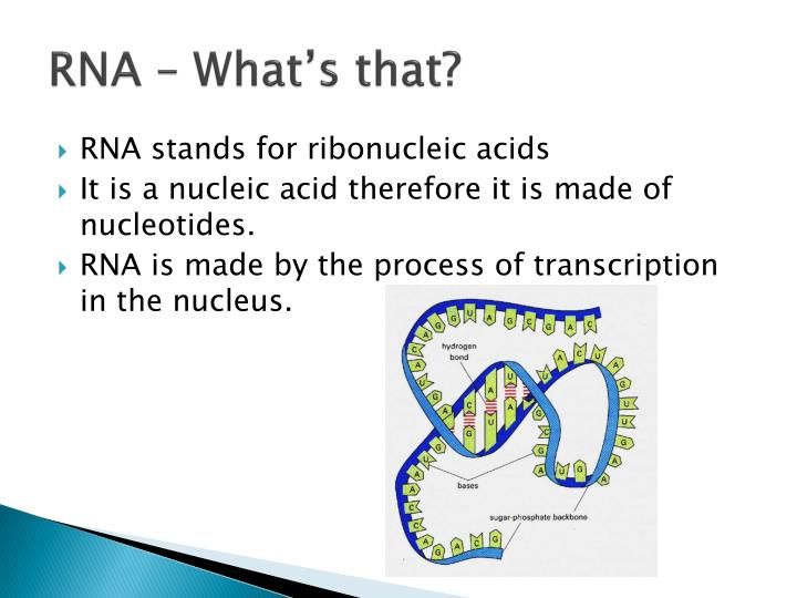 RNA – What's that?
