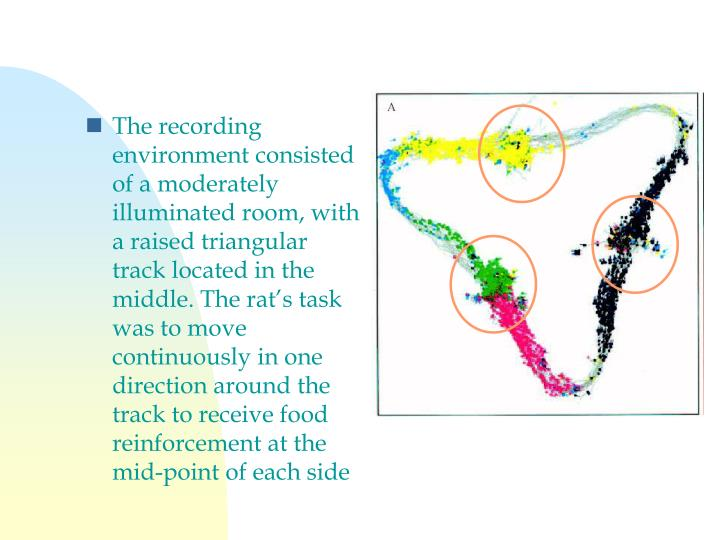 The recording environment consisted of a moderately illuminated room, with a raised triangular track located in the middle. The rat's task was to move continuously in one direction around the track to receive food reinforcement at the mid-point of each side