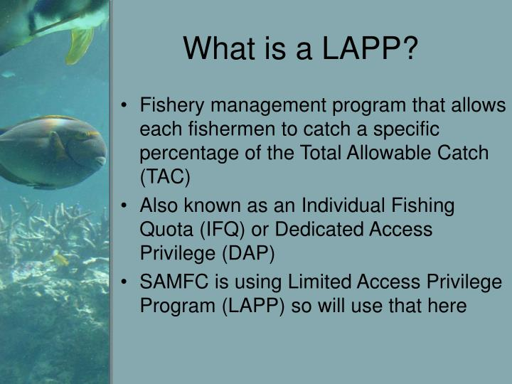 What is a LAPP?