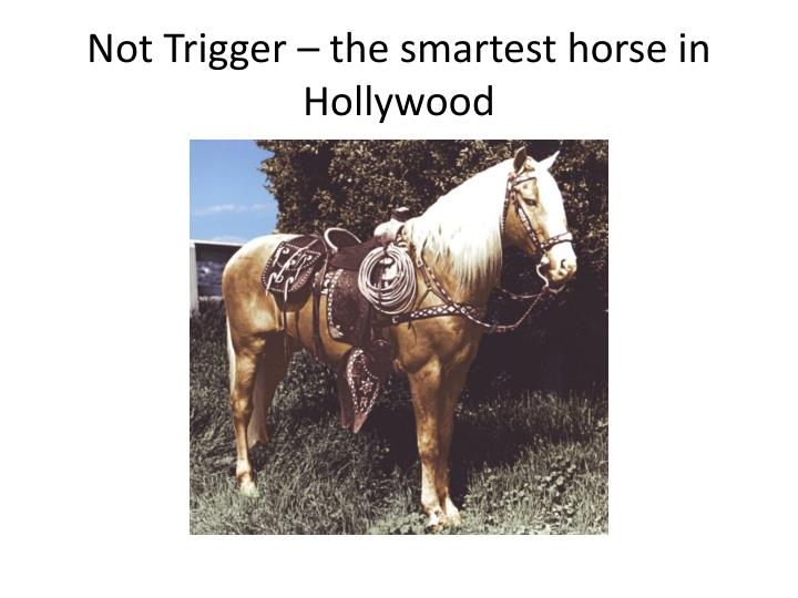 Not Trigger – the smartest horse in Hollywood