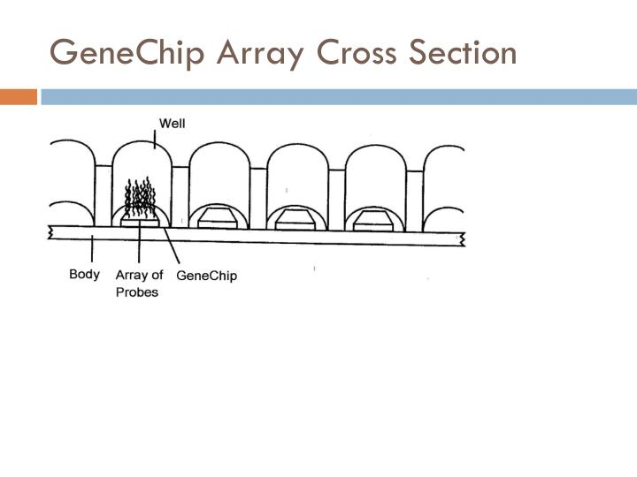GeneChip Array Cross Section