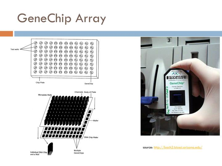 GeneChip Array