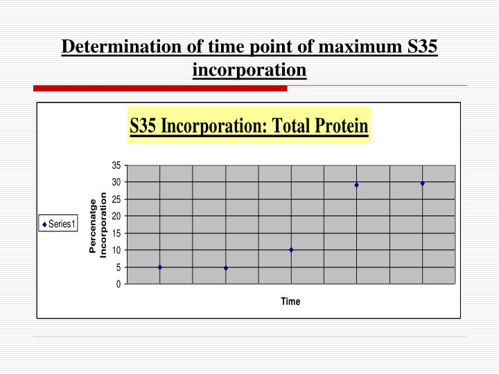 Determination of time point of maximum S35 incorporation