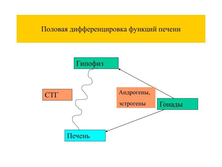 Половая дифференцировка функций печени