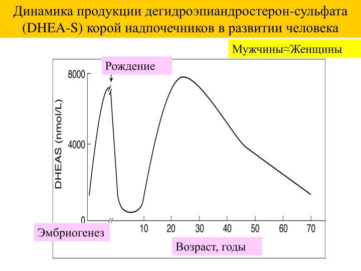 Динамика продукции дегидроэпиандростерон-сульфата