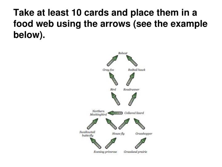 Take at least 10 cards and place them in a food web using the arrows (see the example below).