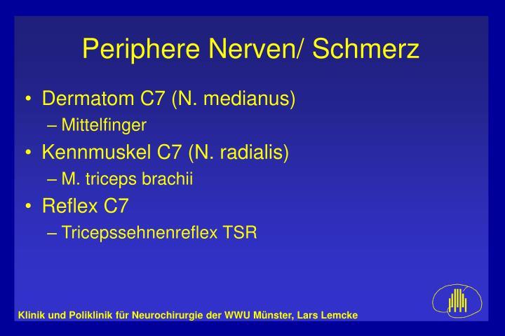 Dermatom C7 (N. medianus)