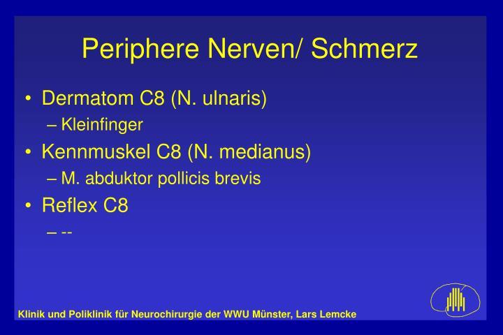 Dermatom C8 (N. ulnaris)