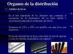 organos de la distribuci n