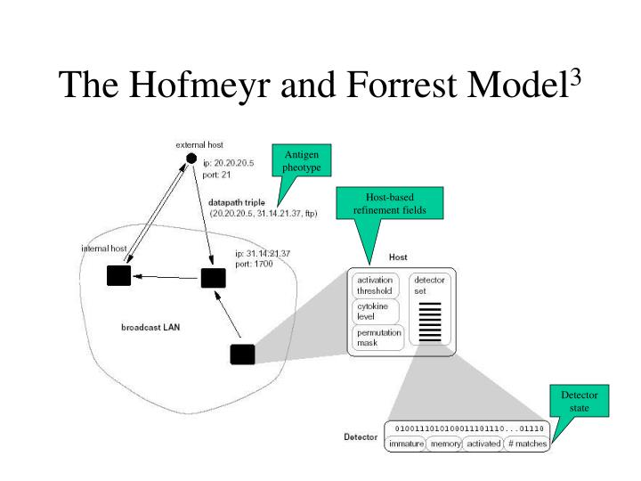 The Hofmeyr and Forrest Model