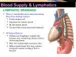 blood supply lymphatics10