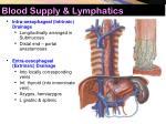blood supply lymphatics7