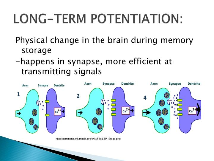powerpoint presentation on long term memory Outline motivations asian monsoon & soil moisture land surface hydrological cycle & long term variation land memory local & non  powerpoint presentation.