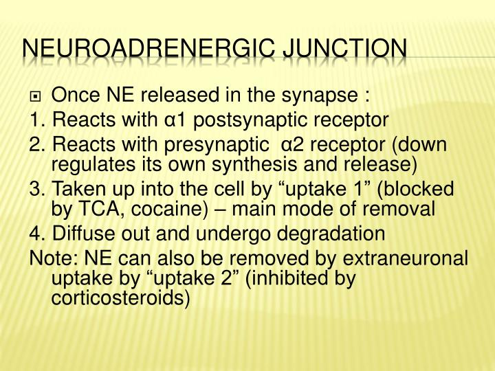 Once NE released in the synapse :