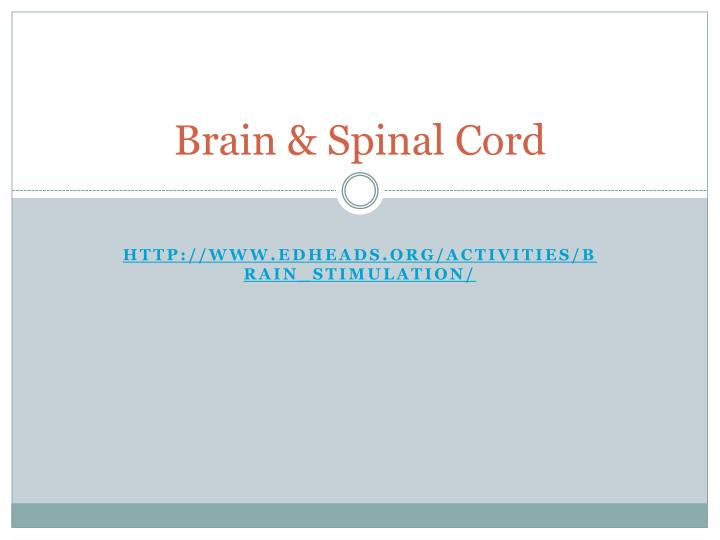 brain spinal cord