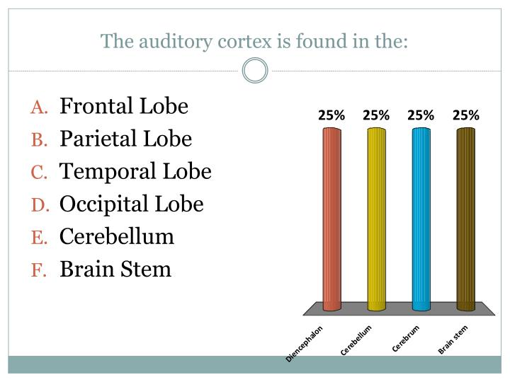 The auditory cortex is found in the: