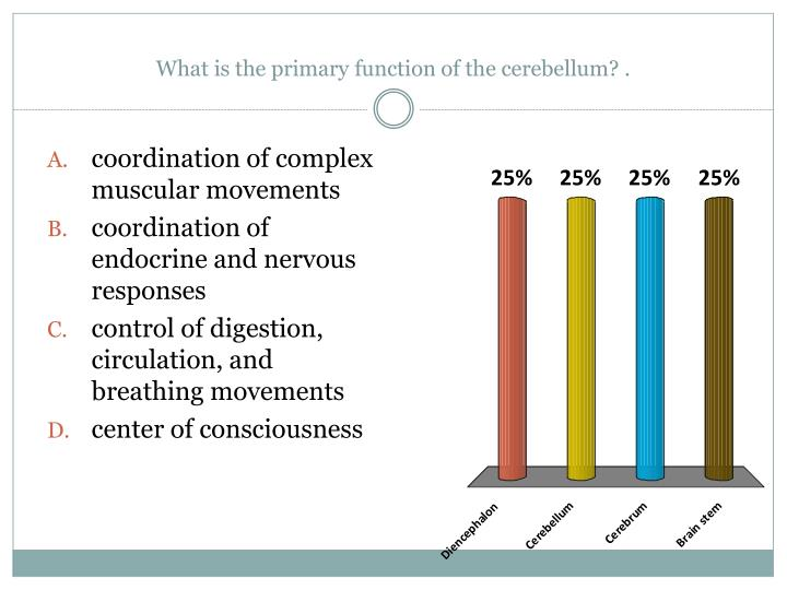 What is the primary function of the cerebellum? .