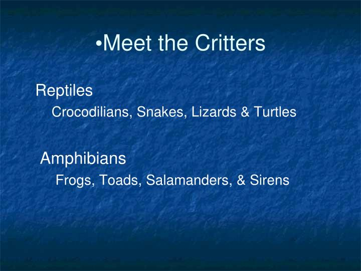 Meet the Critters